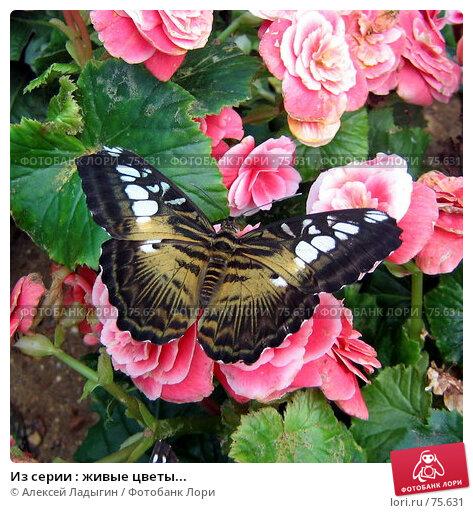 Купить «Из серии : живые цветы...», фото № 75631, снято 15 июля 2007 г. (c) Алексей Ладыгин / Фотобанк Лори