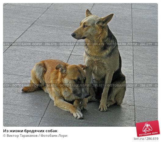 Из жизни бродячих собак, эксклюзивное фото № 286619, снято 8 мая 2008 г. (c) Виктор Тараканов / Фотобанк Лори