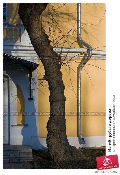 Изгиб трубы и дерева, фото № 173287, снято 4 января 2008 г. (c) Юрий Синицын / Фотобанк Лори