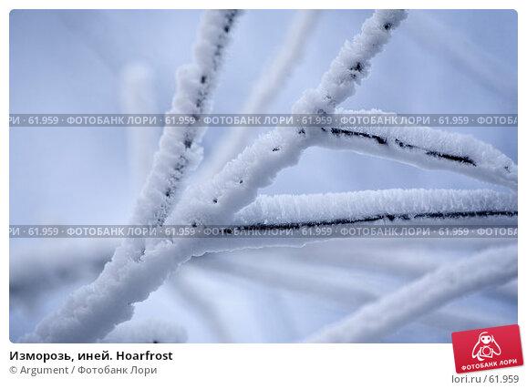 Купить «Изморозь, иней. Hoarfrost», фото № 61959, снято 30 января 2007 г. (c) Argument / Фотобанк Лори