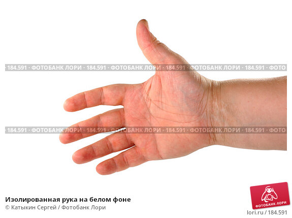 Купить «Изолированная рука на белом фоне», фото № 184591, снято 16 декабря 2007 г. (c) Катыкин Сергей / Фотобанк Лори