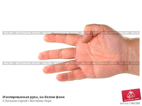 Купить «Изолированная рука, на белом фоне», фото № 184599, снято 16 декабря 2007 г. (c) Катыкин Сергей / Фотобанк Лори
