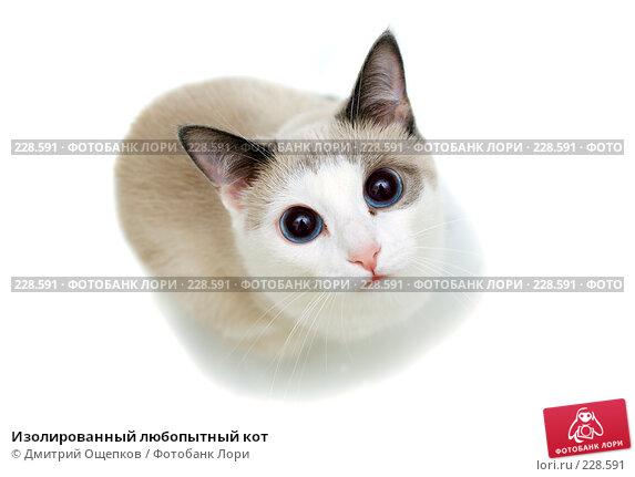 Изолированный любопытный кот, фото № 228591, снято 3 марта 2008 г. (c) Дмитрий Ощепков / Фотобанк Лори