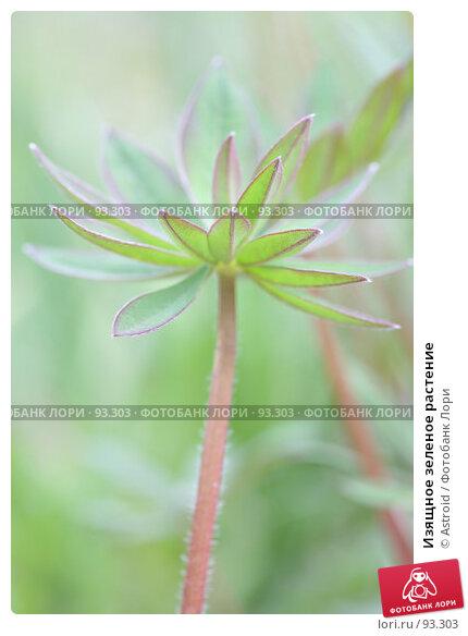 Изящное зеленое растение, фото № 93303, снято 8 мая 2007 г. (c) Astroid / Фотобанк Лори