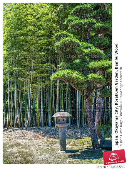 Купить «Japan, Okayama City, Korakuen Garden, Bambu Wood.», фото № 21008539, снято 26 мая 2015 г. (c) age Fotostock / Фотобанк Лори