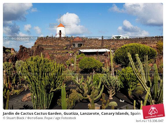 Jardin de cactus cactus garden guatiza lanzarote canary for Jardin de cactus lanzarote