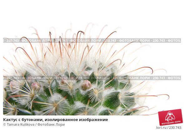 Кактус с бутонами, изолированное изображение, фото № 230743, снято 23 марта 2008 г. (c) Tamara Kulikova / Фотобанк Лори