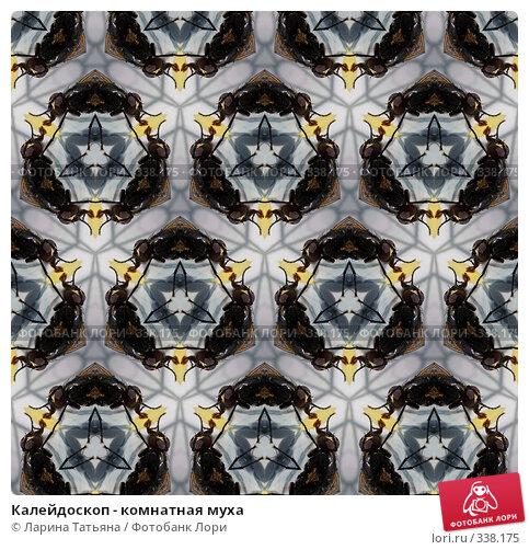 Калейдоскоп - комнатная муха, фото № 338175, снято 24 января 2017 г. (c) Ларина Татьяна / Фотобанк Лори