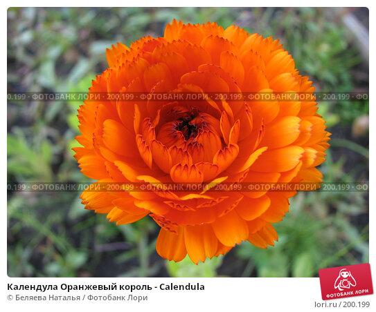 Календула Оранжевый король - Calendula, фото № 200199, снято 9 сентября 2007 г. (c) Беляева Наталья / Фотобанк Лори