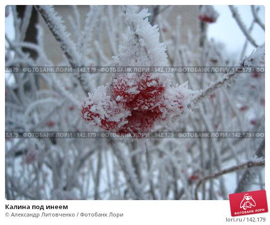 Калина под инеем, фото № 142179, снято 7 декабря 2007 г. (c) Александр Литовченко / Фотобанк Лори