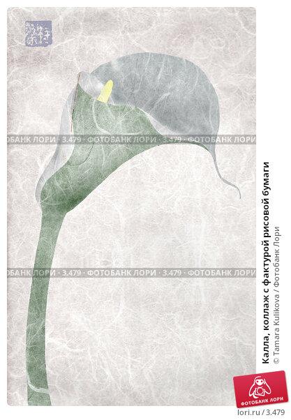 Калла, коллаж с фактурой рисовой бумаги, иллюстрация № 3479 (c) Tamara Kulikova / Фотобанк Лори