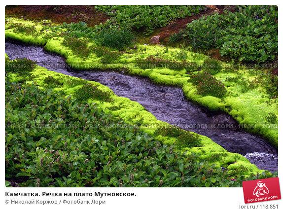 Камчатка. Речка на плато Мутновское., фото № 118851, снято 27 июня 2007 г. (c) Николай Коржов / Фотобанк Лори