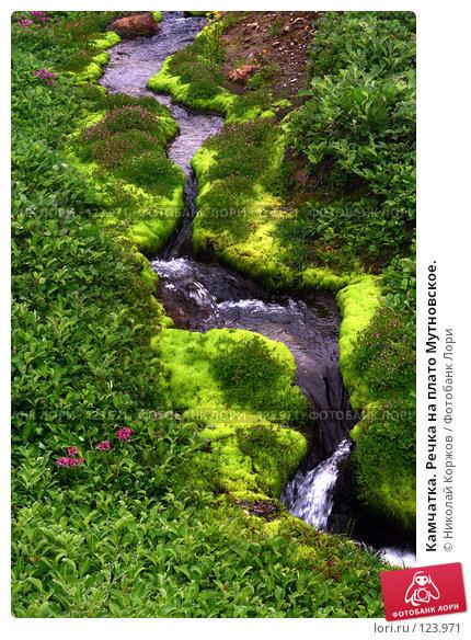 Камчатка. Речка на плато Мутновское., фото № 123971, снято 27 июня 2007 г. (c) Николай Коржов / Фотобанк Лори