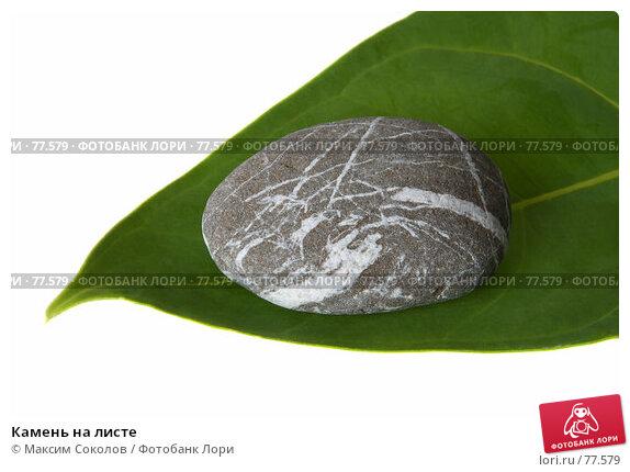 Камень на листе, фото № 77579, снято 24 июля 2007 г. (c) Максим Соколов / Фотобанк Лори