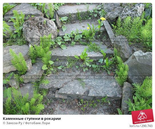 Каменные ступени в рокарии, фото № 290743, снято 17 мая 2008 г. (c) Заноза-Ру / Фотобанк Лори