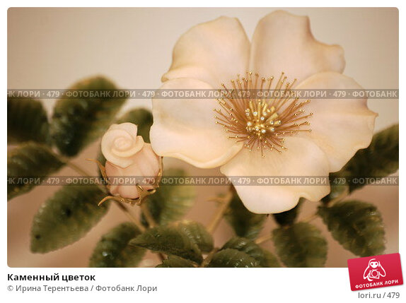 Каменный цветок, эксклюзивное фото № 479, снято 25 июня 2017 г. (c) Ирина Терентьева / Фотобанк Лори