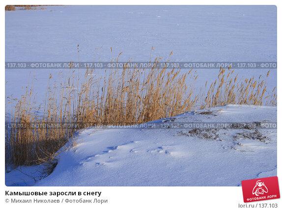 Камышовые заросли в снегу, фото № 137103, снято 1 декабря 2007 г. (c) Михаил Николаев / Фотобанк Лори