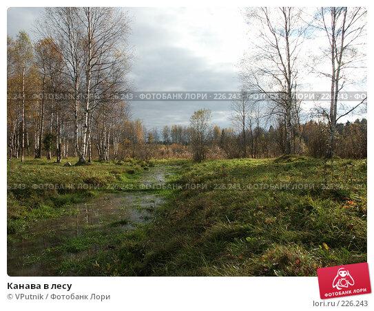 Купить «Канава в лесу», фото № 226243, снято 8 октября 2005 г. (c) VPutnik / Фотобанк Лори