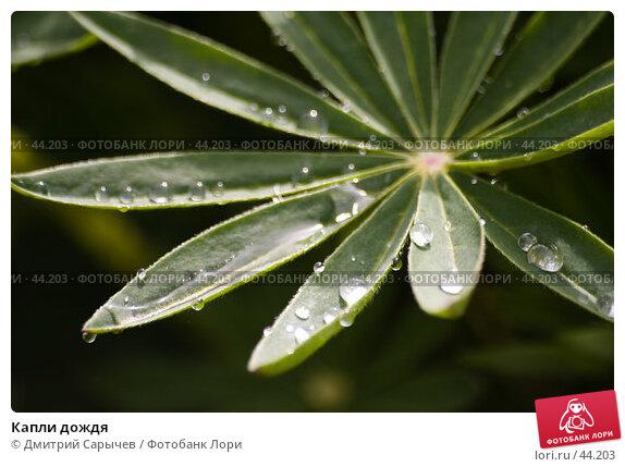 Купить «Капли дождя», фото № 44203, снято 9 мая 2007 г. (c) Дмитрий Сарычев / Фотобанк Лори