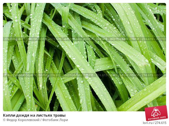 Капли дождя на листьях травы, фото № 274615, снято 6 мая 2008 г. (c) Федор Королевский / Фотобанк Лори
