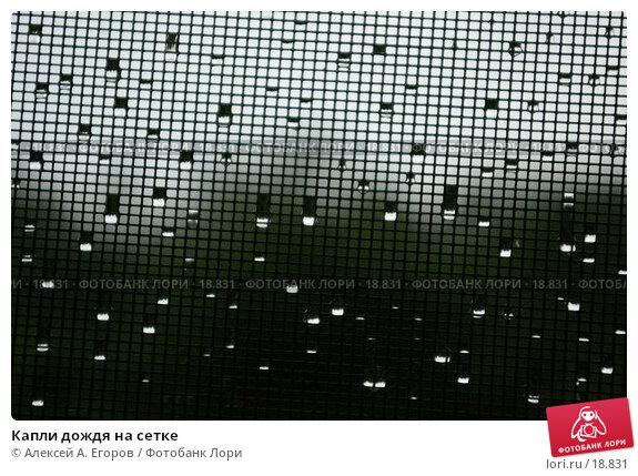 Капли дождя на сетке, фото № 18831, снято 14 июля 2006 г. (c) Алексей А. Егоров / Фотобанк Лори