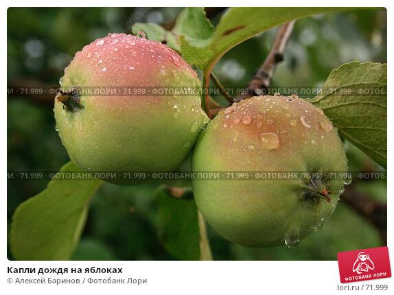 Капли дождя на яблоках, фото № 71999, снято 29 июля 2007 г. (c) Алексей Баринов / Фотобанк Лори