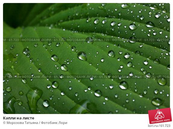 Капли на листе, фото № 61723, снято 18 июня 2007 г. (c) Морозова Татьяна / Фотобанк Лори