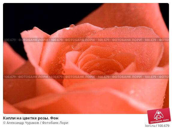 Купить «Капли на цветке розы. Фон», фото № 100679, снято 24 марта 2007 г. (c) Александр Чураков / Фотобанк Лори