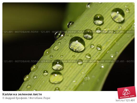 Капли на зеленом листе, фото № 121491, снято 8 сентября 2007 г. (c) Андрей Ерофеев / Фотобанк Лори