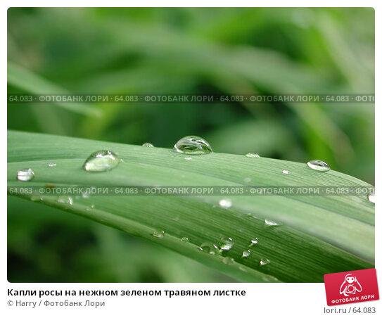 Купить «Капли росы на нежном зеленом травяном листке», фото № 64083, снято 6 мая 2004 г. (c) Harry / Фотобанк Лори