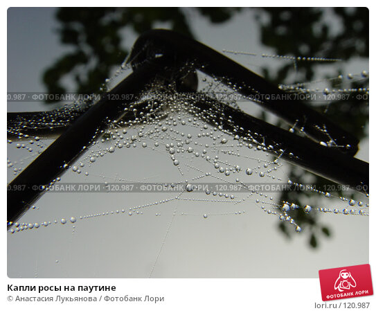 Капли росы на паутине, фото № 120987, снято 18 марта 2002 г. (c) Анастасия Лукьянова / Фотобанк Лори