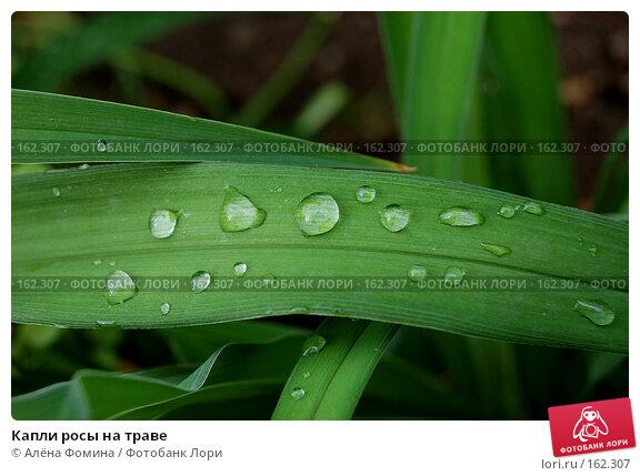 Капли росы на траве, фото № 162307, снято 17 мая 2006 г. (c) Алёна Фомина / Фотобанк Лори
