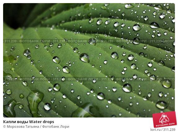 Капли воды Water drops, фото № 311239, снято 18 июня 2007 г. (c) Морозова Татьяна / Фотобанк Лори