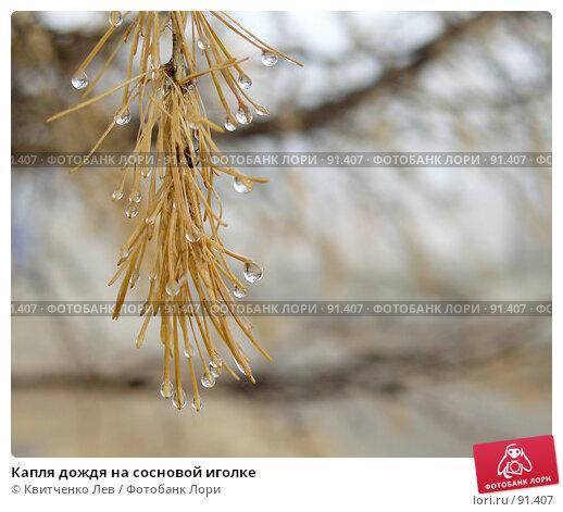 Капля дождя на сосновой иголке, фото № 91407, снято 5 ноября 2006 г. (c) Квитченко Лев / Фотобанк Лори