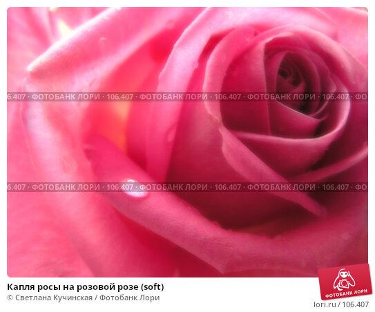 Капля росы на розовой розе (soft), фото № 106407, снято 30 марта 2017 г. (c) Светлана Кучинская / Фотобанк Лори