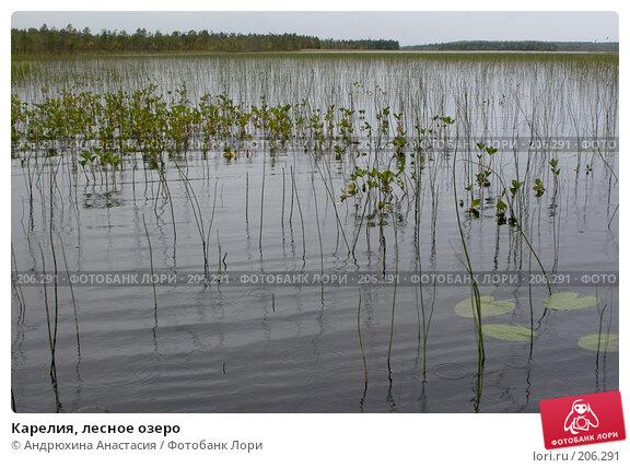 Карелия, лесное озеро, фото № 206291, снято 11 сентября 2007 г. (c) Андрюхина Анастасия / Фотобанк Лори