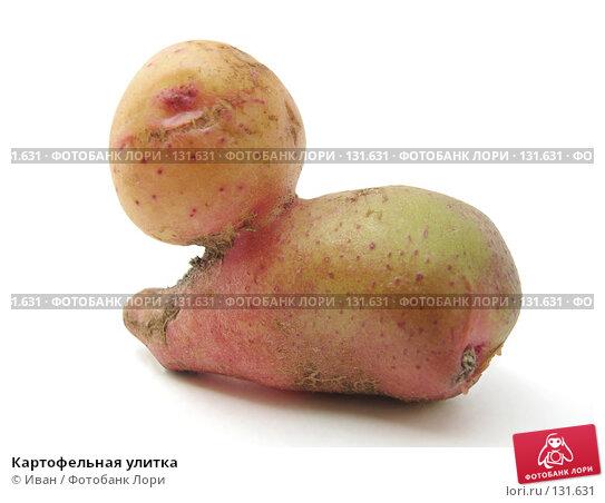 Картофельная улитка, фото № 131631, снято 8 июля 2007 г. (c) Иван / Фотобанк Лори