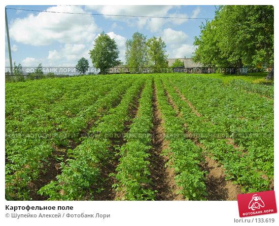 Картофельное поле, фото № 133619, снято 24 мая 2007 г. (c) Шупейко Алексей / Фотобанк Лори