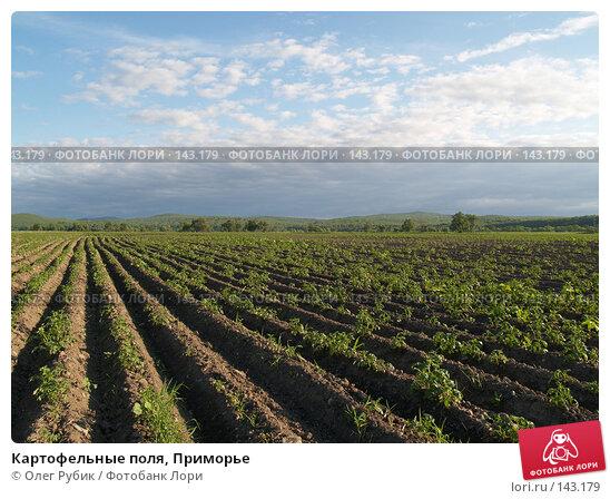 Купить «Картофельные поля, Приморье», фото № 143179, снято 13 июля 2007 г. (c) Олег Рубик / Фотобанк Лори