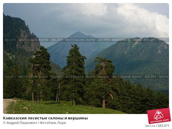 Купить «Кавказские лесистые склоны и вершины», фото № 283071, снято 22 июля 2007 г. (c) Андрей Пашкевич / Фотобанк Лори