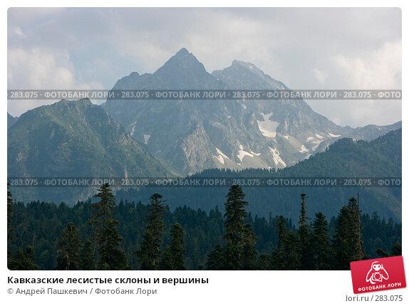 Кавказские лесистые склоны и вершины, фото № 283075, снято 22 июля 2007 г. (c) Андрей Пашкевич / Фотобанк Лори
