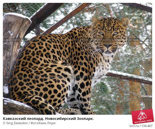 Кавказский леопард. Новосибирский Зоопарк., фото № 134467, снято 7 ноября 2004 г. (c) Serg Zastavkin / Фотобанк Лори