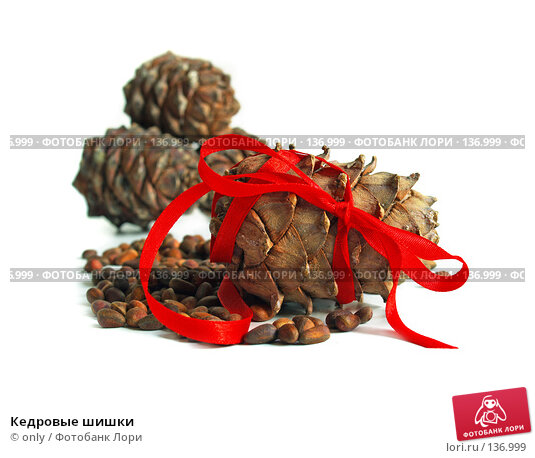 Купить «Кедровые шишки», фото № 136999, снято 24 сентября 2007 г. (c) only / Фотобанк Лори