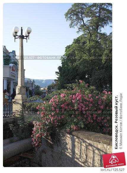 Кисловодск. Розовый куст., фото № 125527, снято 15 июля 2006 г. (c) Михаил Котов / Фотобанк Лори