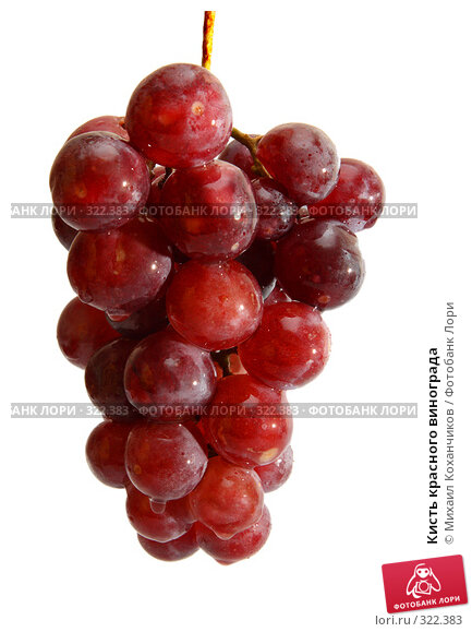 Кисть красного винограда, фото № 322383, снято 8 июня 2008 г. (c) Михаил Коханчиков / Фотобанк Лори