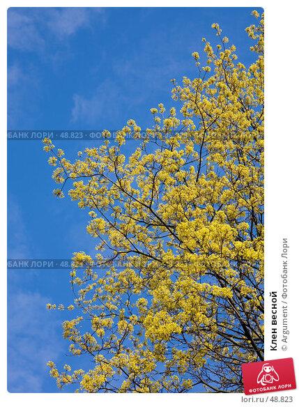Клен весной, фото № 48823, снято 10 мая 2007 г. (c) Argument / Фотобанк Лори