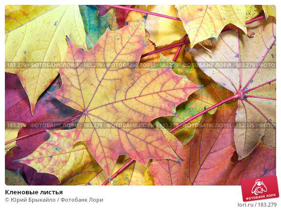 Купить «Кленовые листья», фото № 183279, снято 22 октября 2007 г. (c) Юрий Брыкайло / Фотобанк Лори