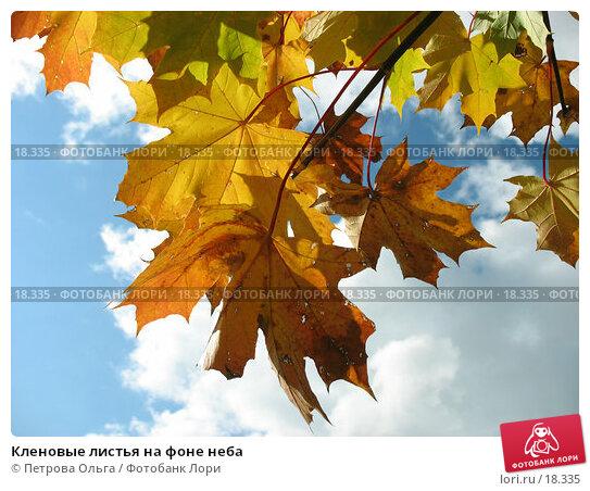Кленовые листья на фоне неба, фото № 18335, снято 12 октября 2006 г. (c) Петрова Ольга / Фотобанк Лори