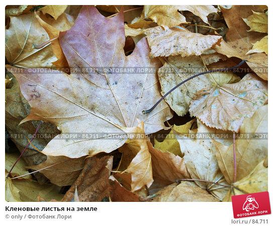Кленовые листья на земле, фото № 84711, снято 10 ноября 2005 г. (c) only / Фотобанк Лори