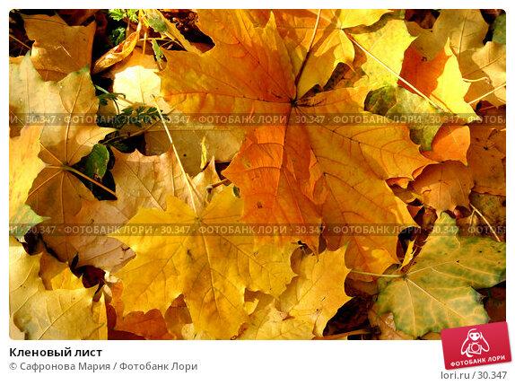 Кленовый лист, фото № 30347, снято 8 октября 2006 г. (c) Сафронова Мария / Фотобанк Лори